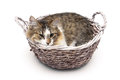 Kitten lying in a basket  on a white background Royalty Free Stock Photo