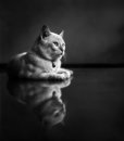 Kitten lying on clean floor friens s pet taken at his house at surabaya east java indonesia the reflection is natural the surface Stock Image