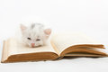 Kitten lying on old book Royalty Free Stock Photo
