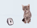 Kitten and mouse. Stock Image