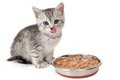 Kitten near a bowl with food. Isolated on white Royalty Free Stock Photo
