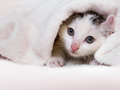 Kitten nestled against a white towel closed in warm sleepy small Royalty Free Stock Image