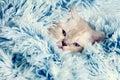 Kitten Peeking Out From Under ...