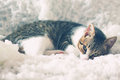 Kitten photo of cute lying in the bed Royalty Free Stock Images