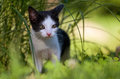 Kitten photo of in the grass Royalty Free Stock Photo