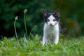 Kitten photo of in the grass Stock Photography