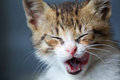Kitten this is photo of yawning Stock Photo