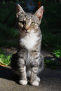 Kitten picture of a cute Royalty Free Stock Images