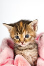 Kitten in pink towel looking sad and tired cosy warm Royalty Free Stock Photo