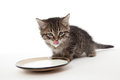 Kitten with plate of sour cream on his lips and Royalty Free Stock Images