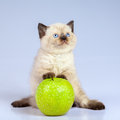 Kitten playing with apple Royalty Free Stock Photo
