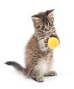 Kitten Playing with Ball Royalty Free Stock Photo