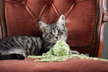 Kitten playing with a ball of wool Royalty Free Stock Photo