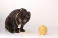 Kitten playing Royalty Free Stock Photo