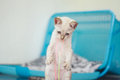 Kitten playing with colourful threads cute white Royalty Free Stock Photography