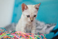 Kitten playing with colourful threads cute white Stock Images
