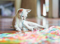 Kitten playing with colourful threads cute white Stock Image