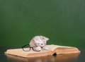 Kitten playing with glasses on a book Royalty Free Stock Photo