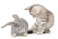 Kitten playing with rabbit grey grey on white background Royalty Free Stock Photos