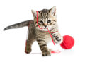 Kitten playing red clew isolated on white Royalty Free Stock Image