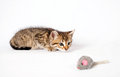 Kitten playing with a toy mouse small tabby Stock Image