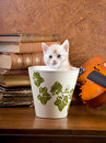 Kitten in a pot Stock Photos