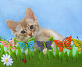 Kitten in a pretend garden Royalty Free Stock Photo
