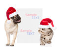 Kitten and pug puppy with red christmas hats peeking from behind empty board. isolated on white background Royalty Free Stock Photo