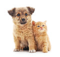 Kitten and puppy. Royalty Free Stock Photo