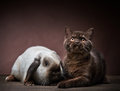 Kitten and rabbit on a brown background Royalty Free Stock Photos