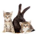Kitten and rabbit friendship animals pets in studio on white background Stock Image