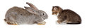 Kitten and rabbit friendship animals pets in studio on white background Royalty Free Stock Photography