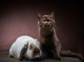 Kitten and rabbit portrait of brown on brown background Royalty Free Stock Photography