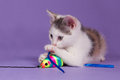 Kitten with rainbow play mouse cute toy Stock Photo