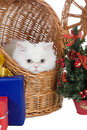 Kitten in the rattan carrier Stock Photos