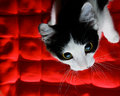 Kitten on a red background Royalty Free Stock Photo