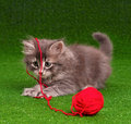 Kitten with red clew cute grey playing of thread on artificial green grass Stock Image