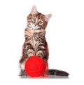 Kitten with red clew of thread cute playing isolated on white background Royalty Free Stock Photography