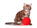 Kitten with red clew of thread cute playing isolated on white background Stock Photos