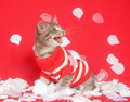 Kitten with red sweater and rose petals Royalty Free Stock Images