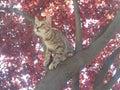 Kitten on red tree