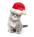 Kitten in santa claus xmas red hat on white background Stock Images