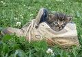 Kitten In The Shoe