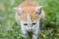 Kitten sit on grass close up a Stock Photos