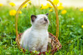 Kitten sitting in a basket on the grass Royalty Free Stock Photo