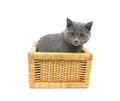 Kitten sitting in basket on a white background. Royalty Free Stock Photo