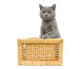 Kitten sitting in basket on a white background Royalty Free Stock Photo