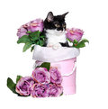 Kitten sitting in a box with flowers isolated on white backgroun Royalty Free Stock Photo