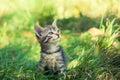 Kitten sitting on the grass Royalty Free Stock Photo