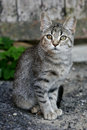 Kitten sitting on gravel Stock Images